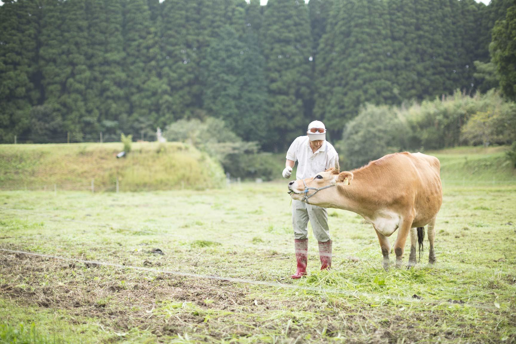 チーズ工房IKAGAWAの放牧地